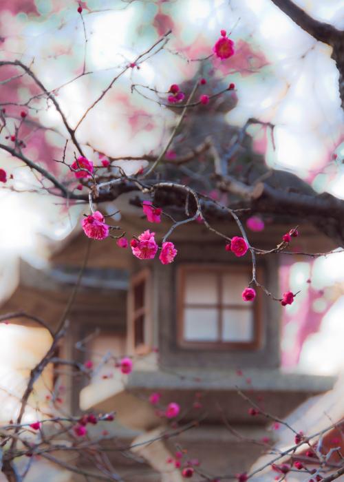 Cherry Blossom Luxury Travel Japan Regency Group