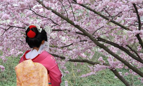 Cherry Blossom Geisha Luxury Travel Japan Regency Group
