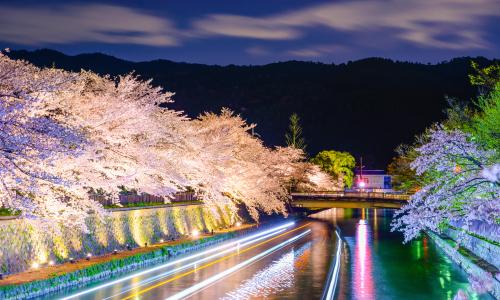 Cherry Blossom Night Scenery Luxury Travel Japan Regency Group