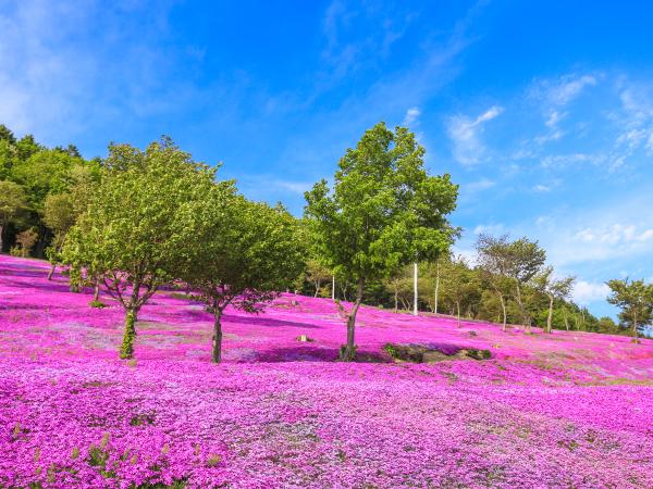 Hokkaido Takinoue Landscape Luxury Travel Japan Regency Group