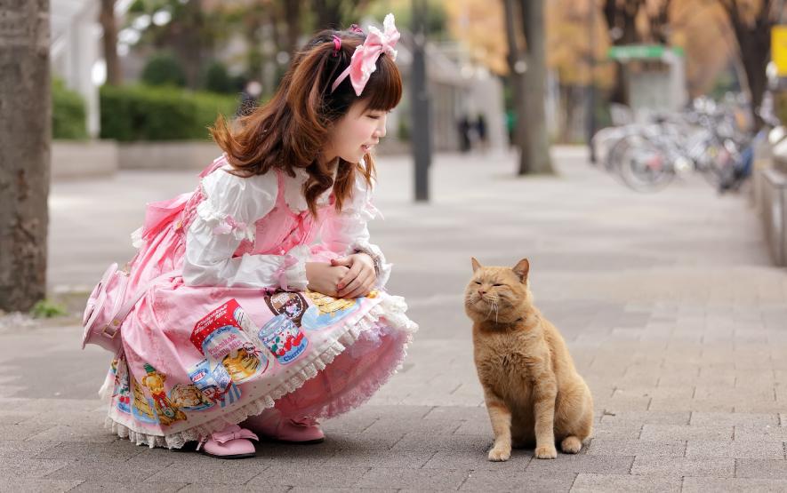 cat family travel luxury travel japan regency group