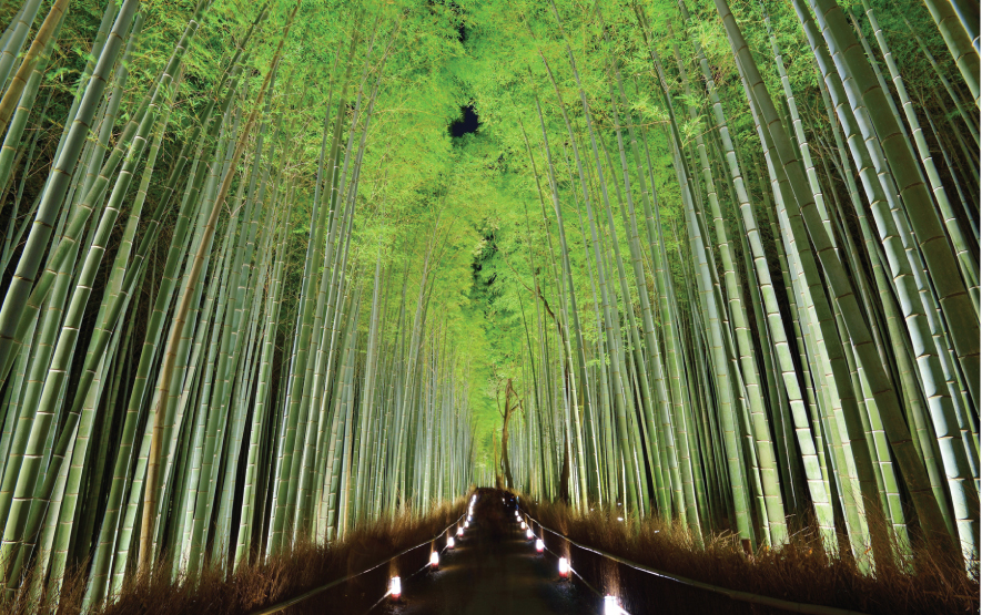 Bamboo Forest Vsit Kyoto Luxury Travel to Japan Regency Group