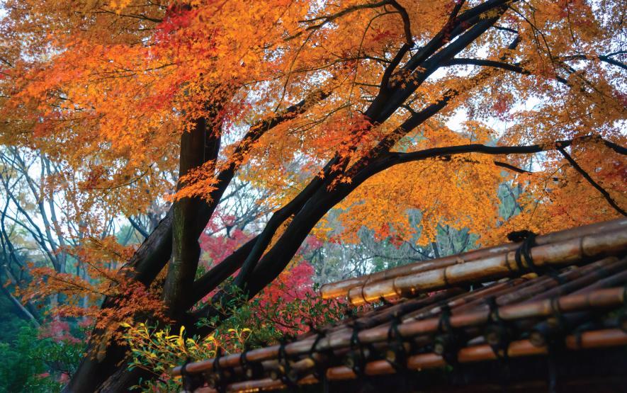 Fall in Japan Luxury Travel to Japan Regency Group