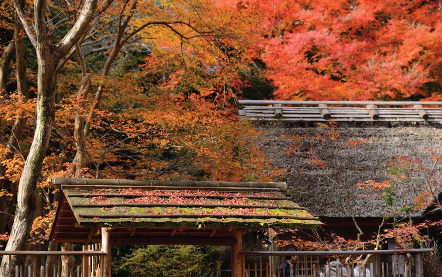 Maples leaves Luxury Travel to Japan Regency Group