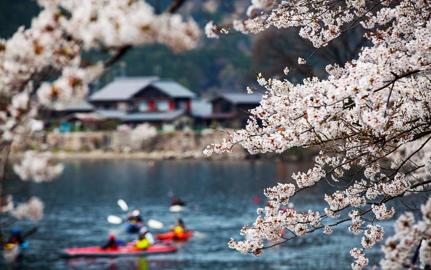 Cherry Blossoms Season Japan Luxury Travel to Japan Regency Group
