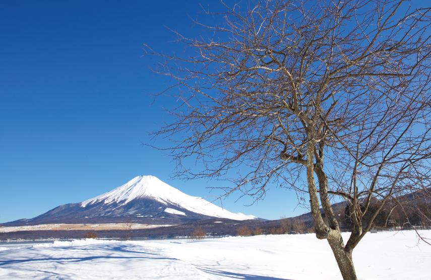 Mount Fuji Hakone Luxury Travel to Japan Regency Group