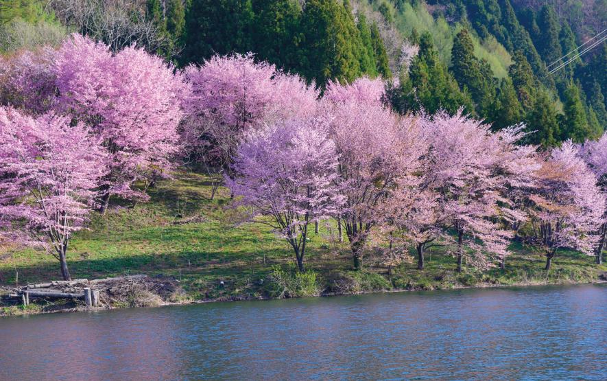 Omachi Nagano Cherry Blossoms Season Luxury Travel t Japan Regency Group