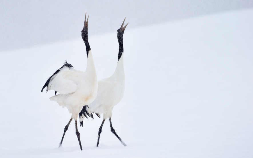 Crane Birds Luxury Travel Japan Regency Group