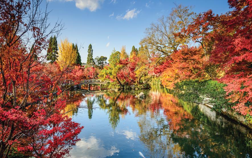 Fall Foliage in Kyoto Japan