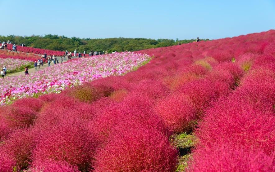 Hitachi Seaside Park Luxury Travel Regency Group Japan