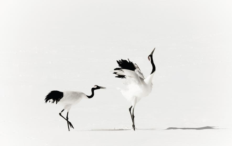 Hokkaido Bird Watching Crane Luxury Travel Japan Regency Group