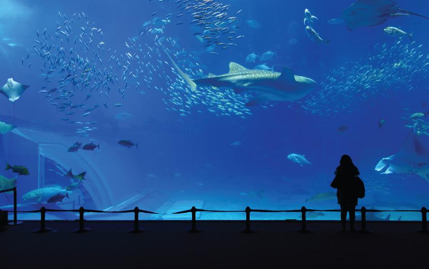 Aquarium Okinawa Regency Group Luxury Travel Japan