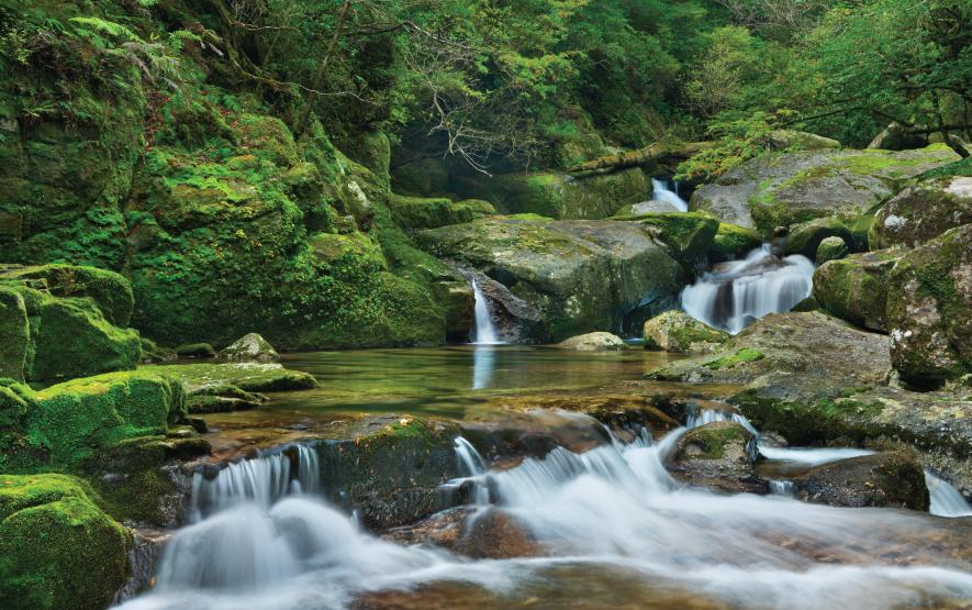 Rainforest river Yakusugi Land Yakushima Island Luxury Travel Japan Regency Group