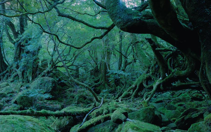 World Heritage Forest Yakushima Luxury Travel Japan Regency Group