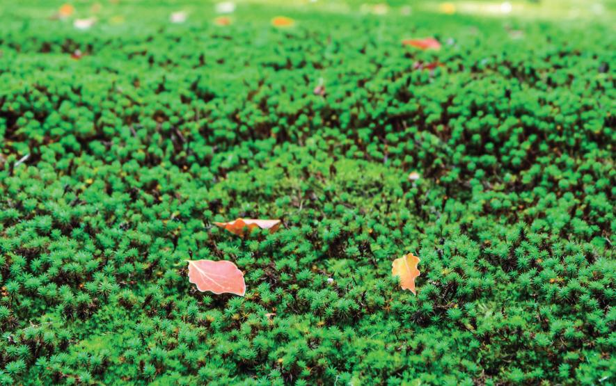 Japan moss Yakushima Luxury Travel Japan Regency Group