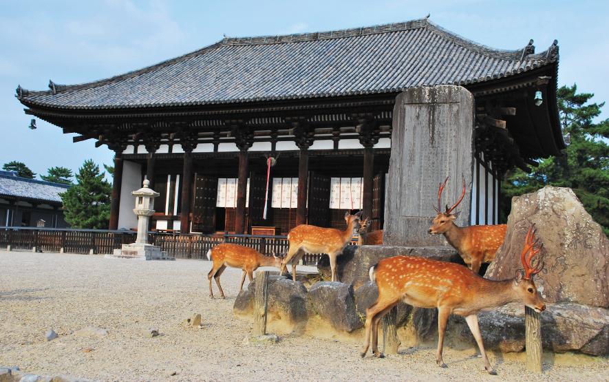 Nara Family Travel Japan Regency Group