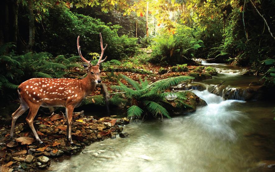 deer hokkaido travel japan regency group