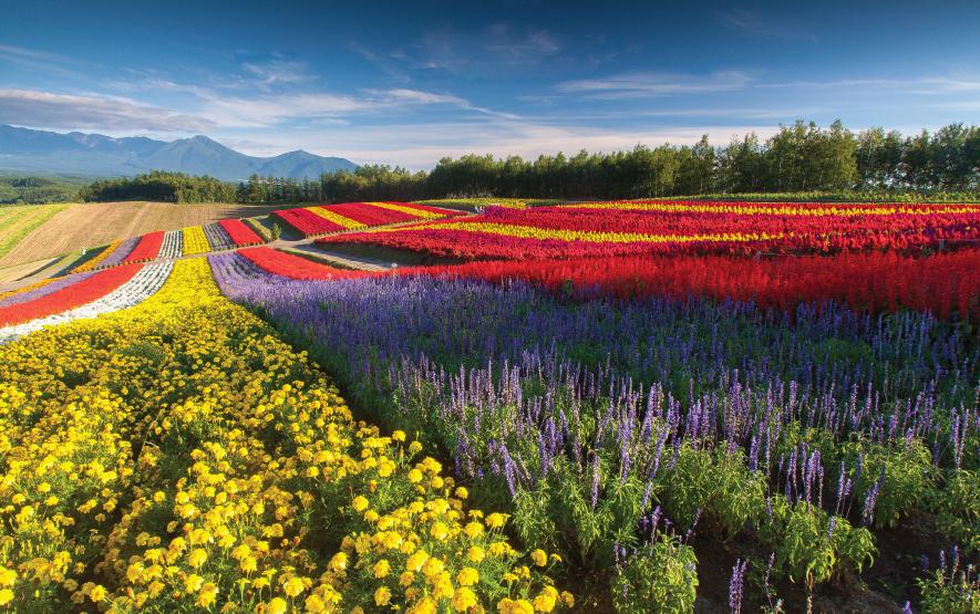 flowers field hokkaido travel japan regency group
