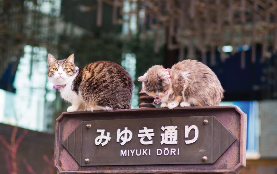 Maneki Neko 2 Travel Japan Regency Group