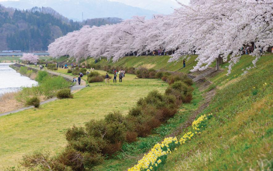 Cherry Trees Hinokinai River Luxury Travel Japan Regency Group