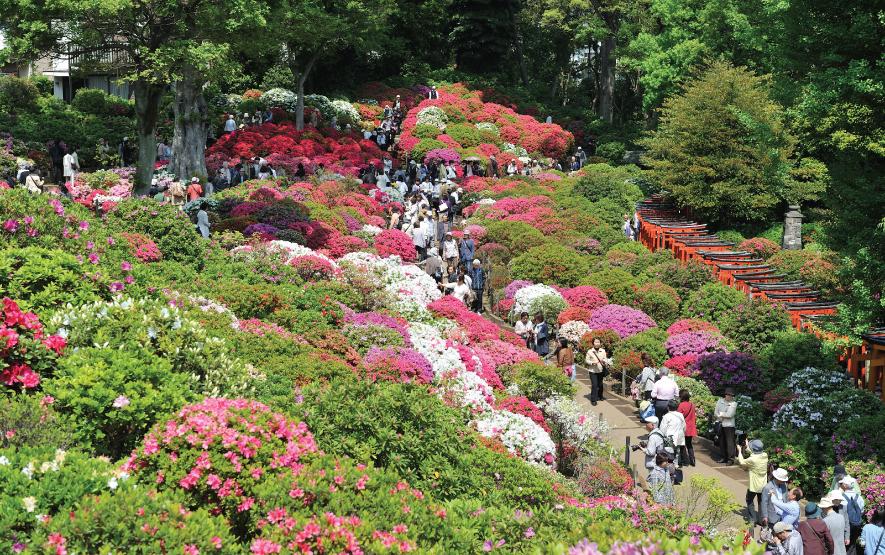 Nezu Shrine Travel Japan Regency Group