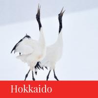hokkaido travel japan regency group