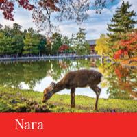 nara travel japan regency group